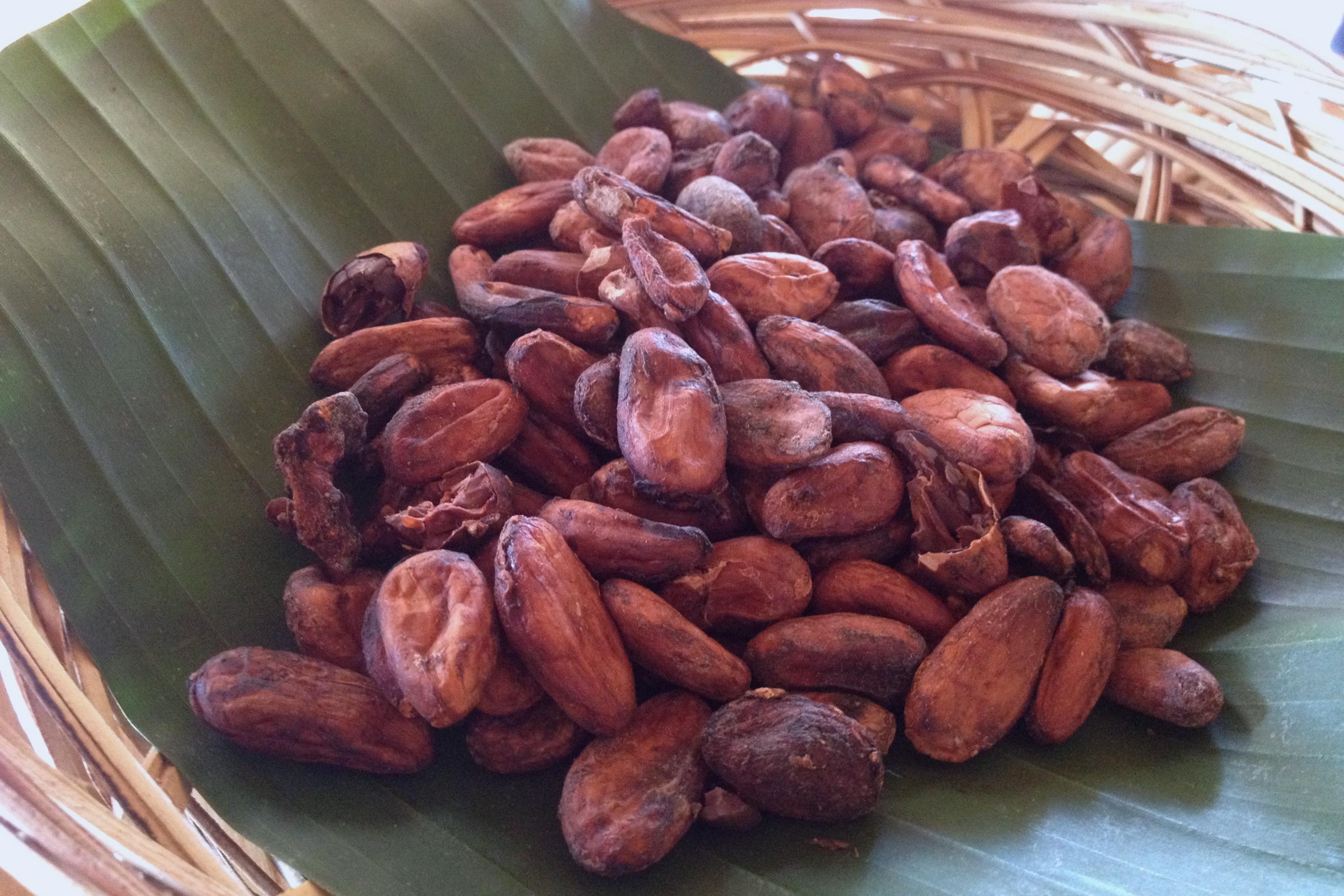 Big Tree Farms chocolate factory | KitchenCoop